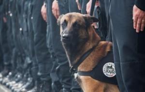 Diesel (7), el perro policía asesinado por un una terrorista suicida esta mañana en Francia
