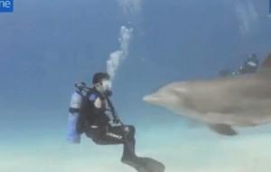 Sorprendente baile de un delfin con un buzo